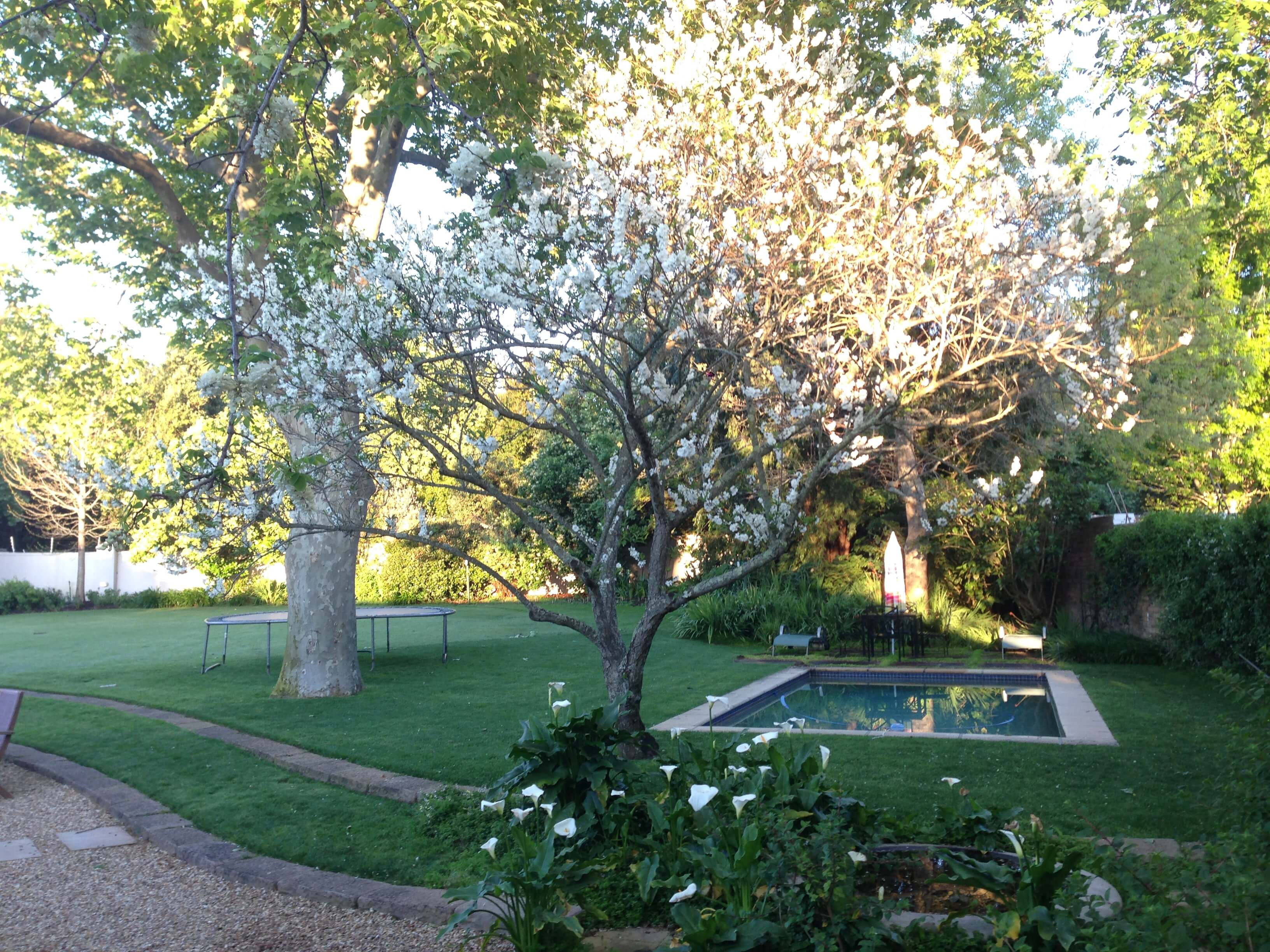 vista of a suburban garden in flower